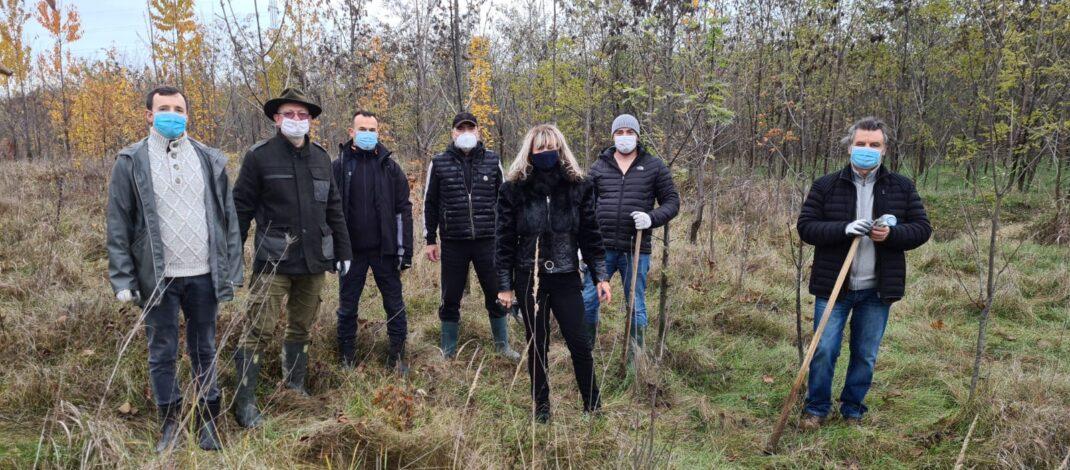 La inițiativa RC Ploiești, încă 2000 de puieți au fost plantați la marginea Ploieștiului